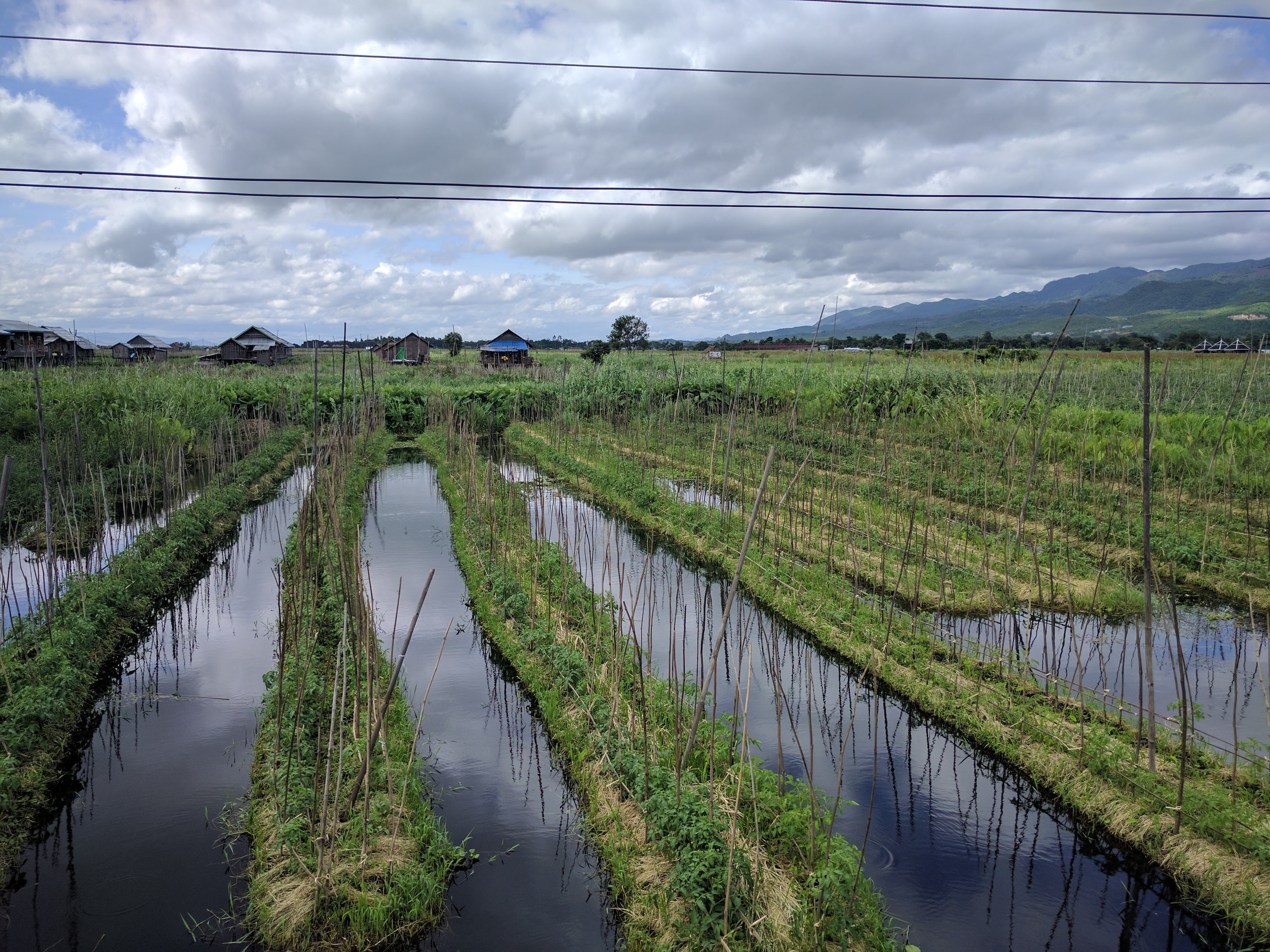 Inle champs