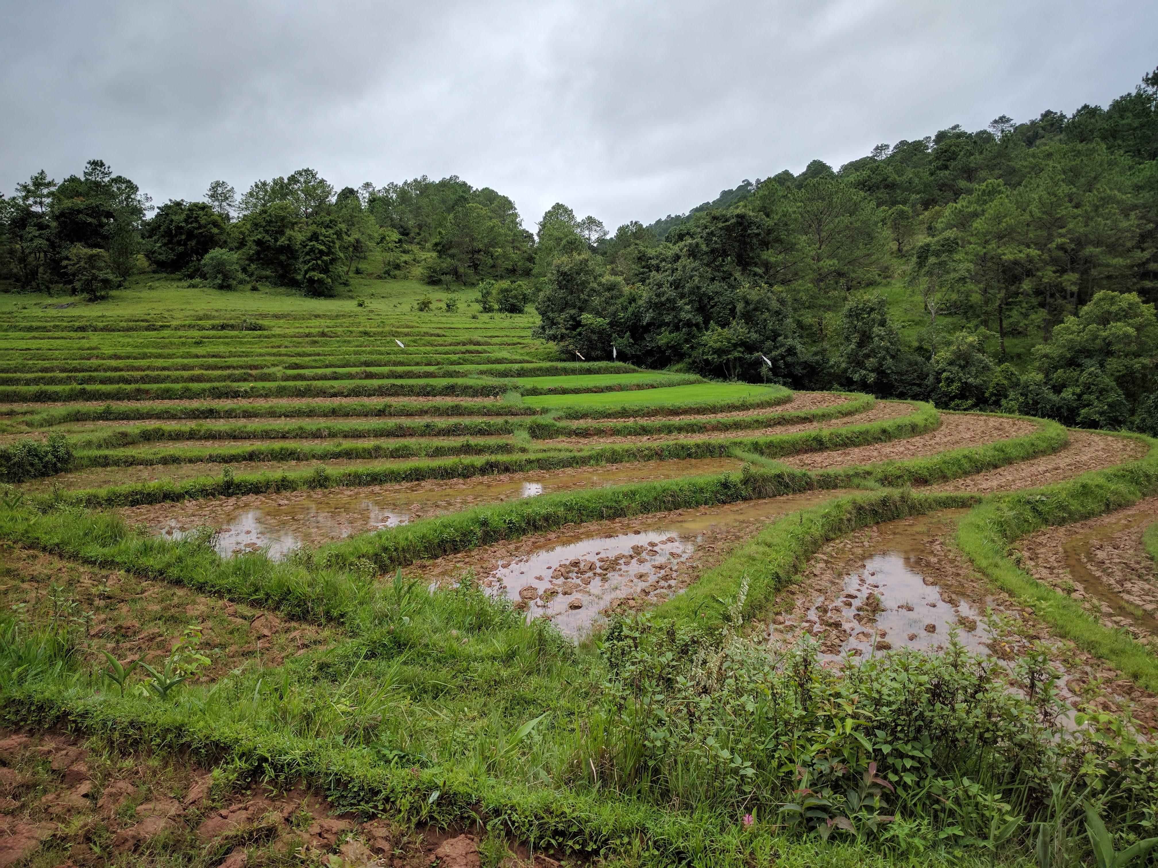 Vue riziere treek