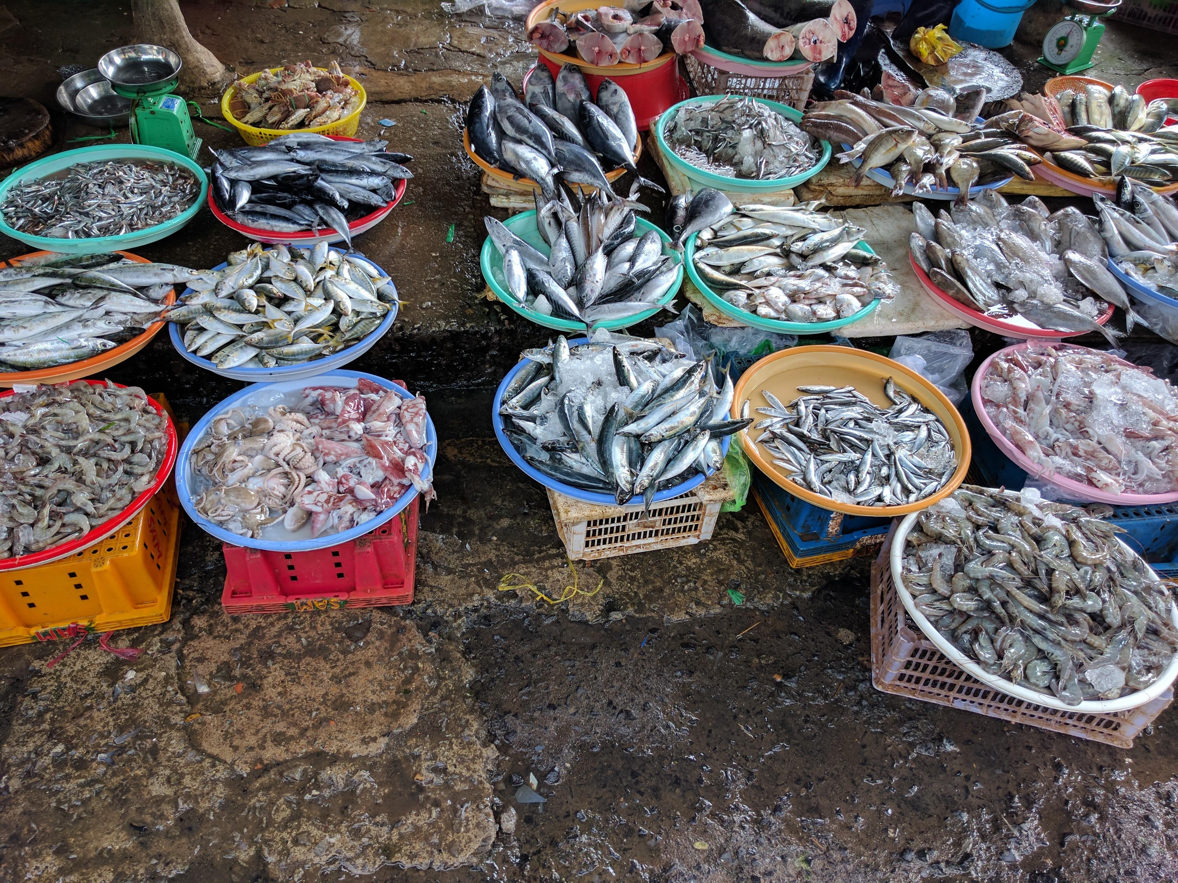 Da lat marché poissons