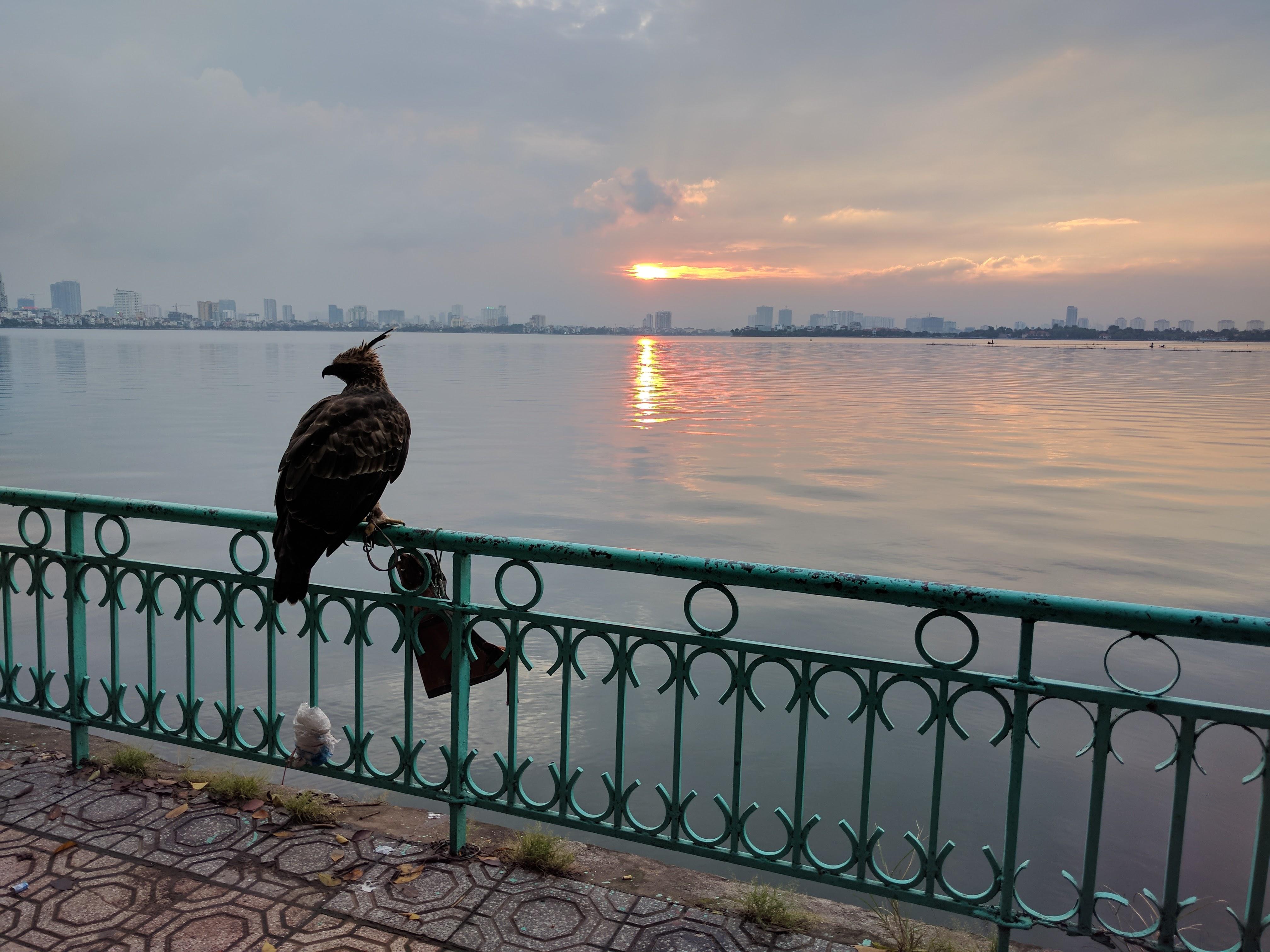 Hanoï aigle